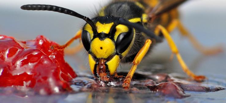 Intepaturile de viespe: Ce sa NU FACI cand ESTI INTEPAT?!